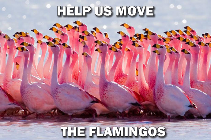 Help Us Move the Flamingos